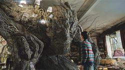 Más sabe un árbol por viejo, que por sabio…